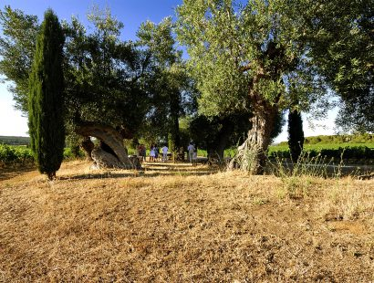 Masseria Amastuola: degustazioni nel vigneto-giardino