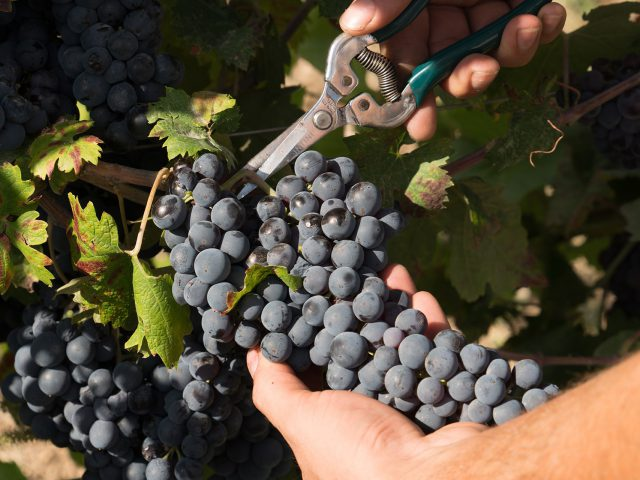 Masseria Amastuola: produzione vini biologici vigneto-giardino