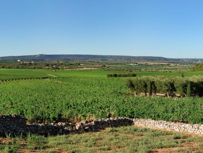 Masseria Amastuola: vigneto-giardino